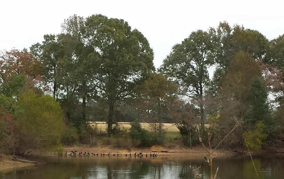 This is an exceptionally nice tract of land currently being used for hay production and grazing.  It is mostly improved pasture with a nice lake and a creek. The property has nice elevation and good water shed. The improved pastures have been well maintained, proper weed control and fertilized regularly. The lake has been there for several years and the owner reports good fishing and ducks are seen often. It is located in the Lovelady ISD and just east of the Trinity River.