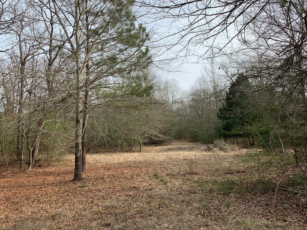 "5.29 acres ""move-in ready""!  There is an 800 sq. ft. cabin with 2 bedrooms and 1 bath, plus a kitchen and living room.  A nice wooded deck is out the back of the house.  There is a 12'x25' enclosed shop and a 12'x40' carport.  The land is mostly wooded with nice oaks and hardwoods."