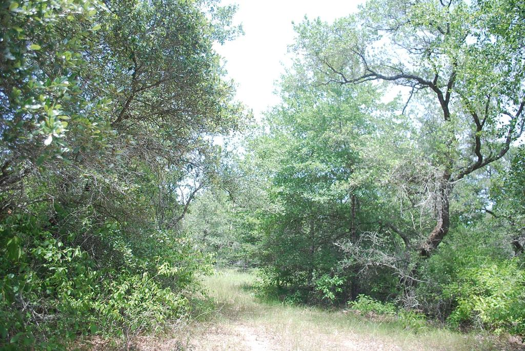 YOU HAVE JUST FOUND THE SECLUSION YOUR ARE LOOKING FOR TO BUILD YOUR WEEKEND RETREAT! This nicely wooded parcel at the end of Sandy Creek Road in Southern Colorado County, awaits the construction of your home in the woods. Here you will find beautiful Live Oaks, Post Oaks and Pin Oak trees and plenty of underbrush for the abundance of wildlife that calls this area HOME! The tract is fenced on 3 sides and offers a small metal building that is already in place for you towards the middle of this nice rectangular shaped piece of land. Very mild restrictions to protect your investment. THERE IS NO FLOOD ZONE ON THIS PROPERTY. NOTE: Front Boundary lines are marked with WHITE flagging tape.