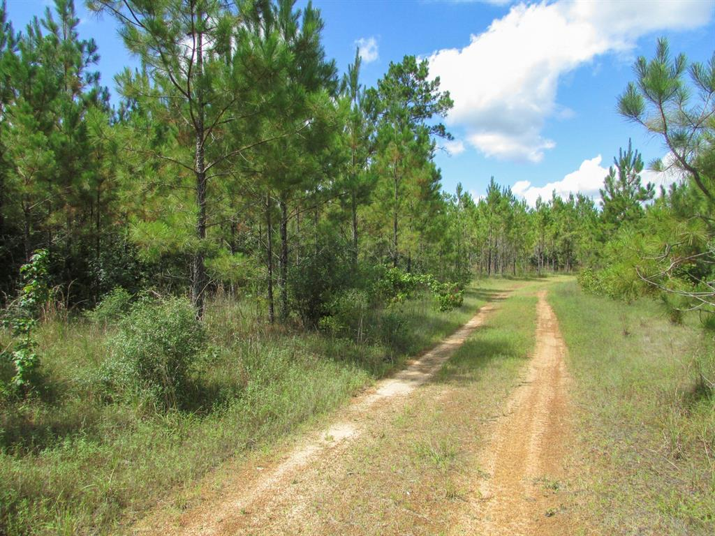 Great recreational/timber tract. Suited for hunting, 4-wheeling, get-away, building locations, secluded but close to amenities. Unrestricted! Oak Ridge Road ends prior to the current access gate. This protion of the current access lane is historical and over an adjoining landowner. Property includes a 50 foot access staff (unimproved) to Oak Ridge Road for future access, if needed.