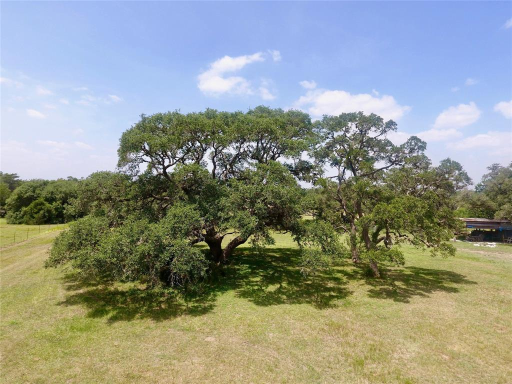 82 acres of privacy, mature live oak trees, with multiple building sites, just 10 minutes south of Hallettsville, TX. This property has a pond, water well, and a tractor shed.  Multiple building sites, with electricity near the property. Easy access to US 77.  This tract has a wet weather creek, with tons of wildlife including turkey, deer, and hogs! Great hunting potential, and the roads have been cleared to access the entire property by UTV or ATV. Live Oaks & Post Oaks abound throughout the property, as well as having a mix of pasture for cattle, horses, or hay production. Come build your dream home and enjoy country life on this great tract of land!