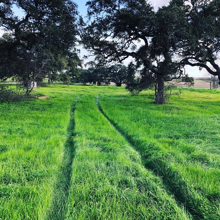 Beautiful old live oaks on the hill overlooking the pasture down below with more trees.