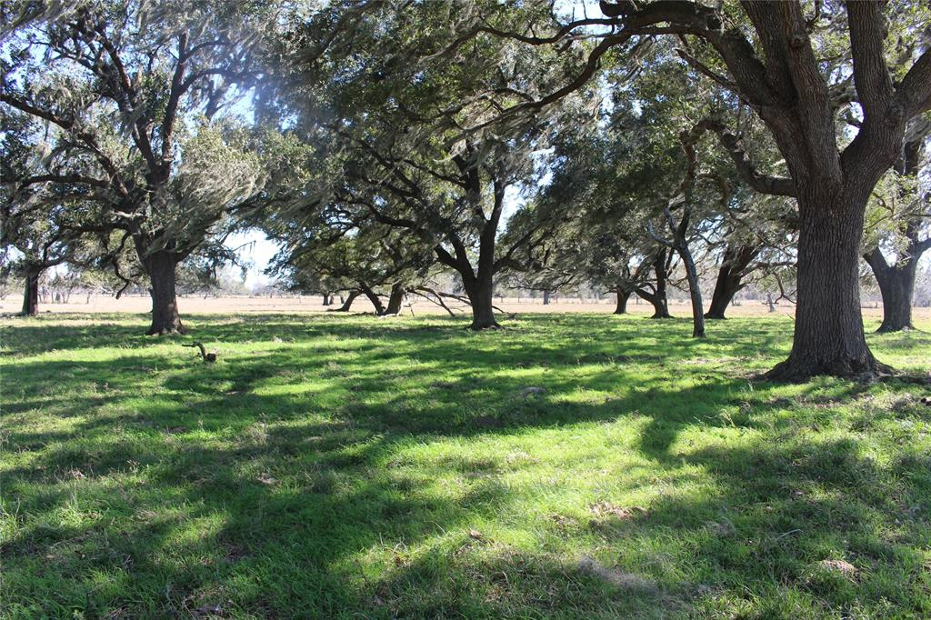 Looking to build your dream home with hundred-year old live oaks, amidst grazing cattle and trophy deer? This spectacular piece of Texas ranch land could be yours! Nestled between large ranches and a federal wildlife refuge, this ranch's soil is a rich sandy loam, very fertile and suitable for hay production. With over a half mile of county road frontage, this property is completely fenced with net wire to help maintain the wild hogs. The seller has managed and fed a large deer herd for the past 12 years; perfect for an avid hunter! The Northeast corner of the property is considered to be a part of the Eagle Nest Lake. It is a must see!