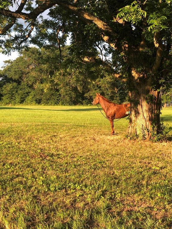 Greener pastures here, Gorgeous 10 acres w/ Hay exemption, pond, ONLY 1 neighbor visible from front deck, 4 bedroom 2 1/2 bath, NEW ROOF, NEW HVAC, carport & garage made of industrial Steel as well as 4 stall horse barn w/ turn out pens. Pole barn with a 20' x 12' workshop, a 12' x 8' greenhouse, raised, irrigated garden beds, a BBQ grove, Huge 2 car garage w/ attached carport, Pool. Walk into back entry after working outside and jump in the shower in half bath. Lots of built in storage leading into laundry room w/ ample room for a second frig and more. Walk into kitchen that opens to living room with high ceilings, fantastic natural light streaming through front windows, opens to deck, big wood burning fireplace at center of wall & beautiful built in shelving. Dining room to the left and master suite that opens to front deck. To the RT, full bath and other 3 bedrooms and one is being used as an office. Great neighbors.  Come get out of the hustle of the city and enjoy country living.