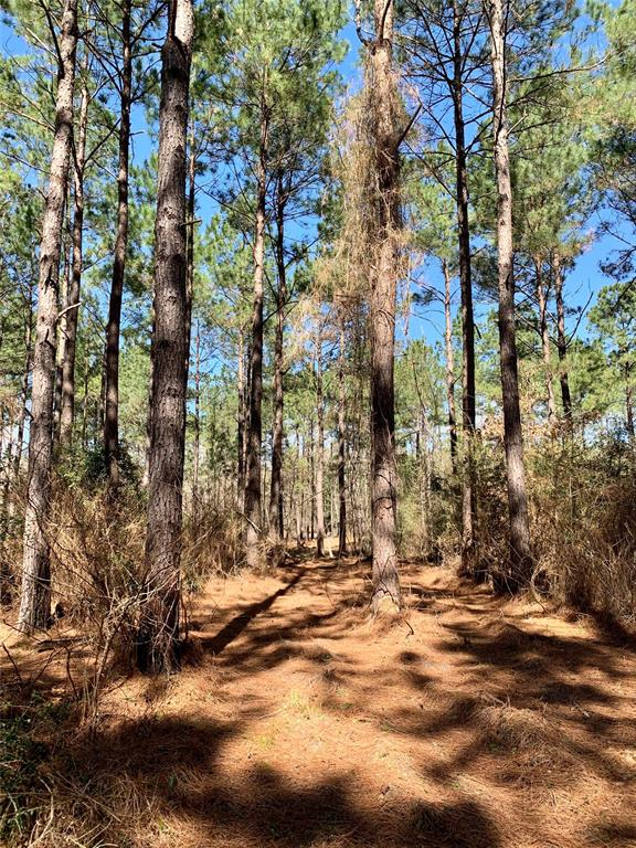 Rural and private acreage just an hour and a half from Houston.   Heavy pine across the property with a creek running on the property.  Electric close-by.  Hunt, Live, or play with the secluded feel you have been looking for.  Multiple other 10 acre tracts available which allow you to make larger acreage.