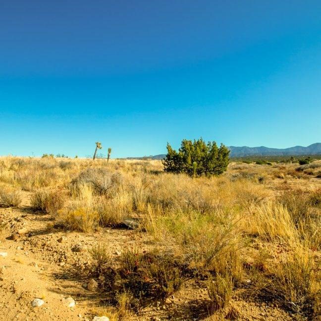 0 Fort Tejon Roads, Llano, CA 93544