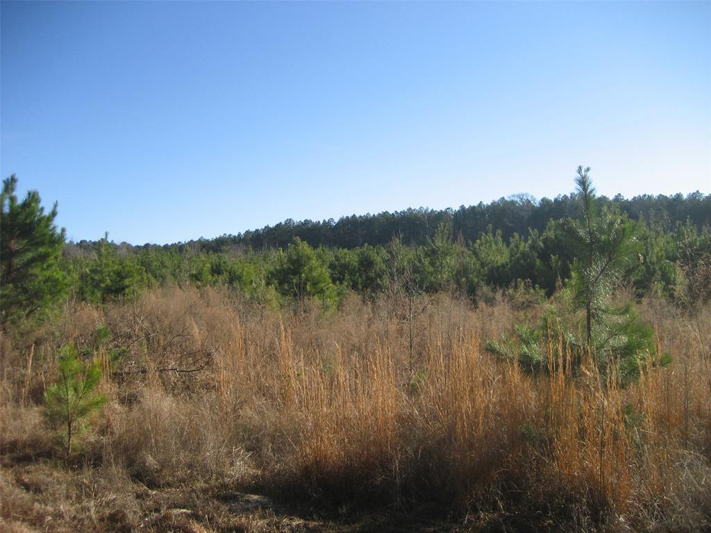 74.01 ACRES EAST OF CROCKETT IN HOUSTON COUNTY. MOSTLY OPEN, SOME WOODS, PROPERTY BORDERING LARGE TIMBER COMPANY.  IDEAL TRACT FOR EAST TEXAS DEER AND HOG HUNTING, MOBILE HOME ON PROPERTY NEEDING SOME REPAIRS, BUT SOLID. SMALL POND, AND CREEK RUNNING THROUGH PROPERTY. SMALL BUILDING FOR STORAGE. ADDITIONAL TAX ID 34961