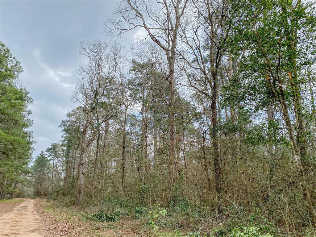 10 Acres Northeast of Willis, Southeast of New Waverly, Tx. Wooded in large natural pine trees and hardwoods with easy access to electricity running along North side of property. Secluded, near the end of Oak Ridge Road off FM 3081, provides necessary privacy, but easy drive to Willis, Conroe, and Houston Metropolitan area. Leave the city behind, own your piece of Texas country.