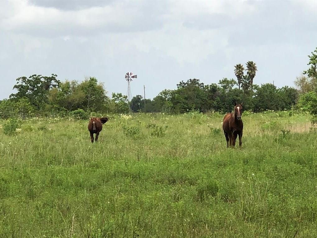 A beautiful 3-acre tract of land located inside of Santa Fe ISD, just outside the city limits. This is the perfect home site for someone who wants to have that private/country feel, while still being close to the necessities. No city restrictions per owner.