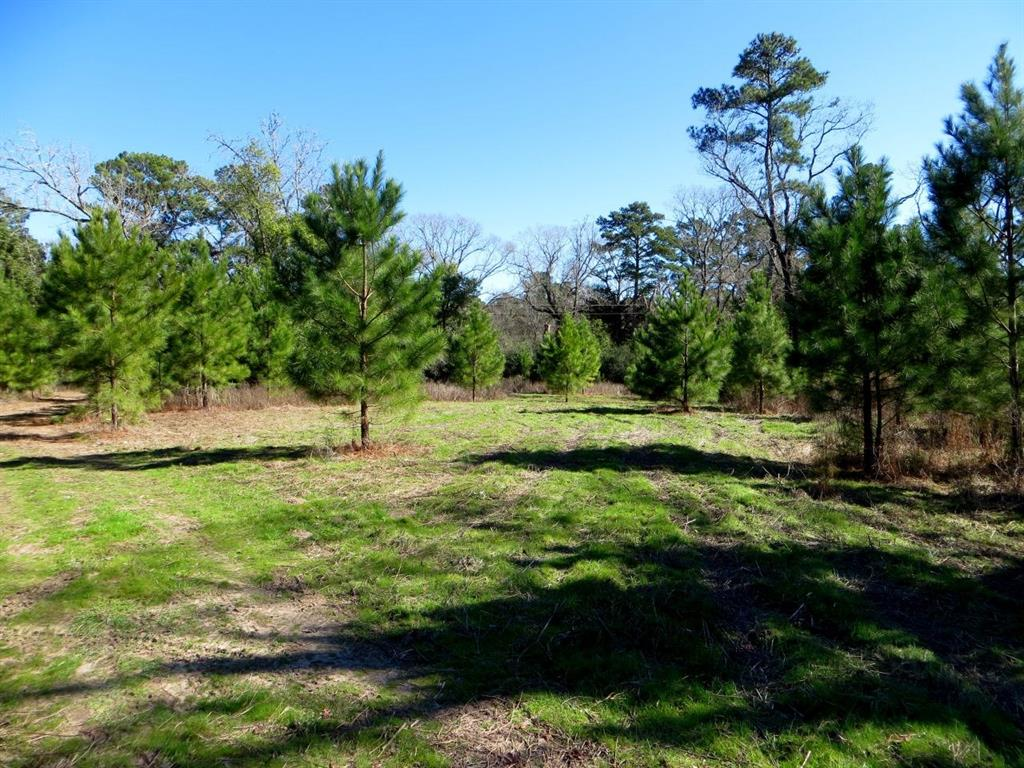 14 Wooded Acs Near the Highly Sought After Whitehall Area.  Nice mix of Pine and Hardwoods, Several Nice Home Sites or  Great  Weekend retreat/ camping .  Lightly Restricted ,Sandy Soils,  Several older outbuildings, Lots of Wildlife.  Great location Easy access to Houston,  Conroe, College Station.  Short Distance to the proposed FM 249 (Aggie Expressway) .