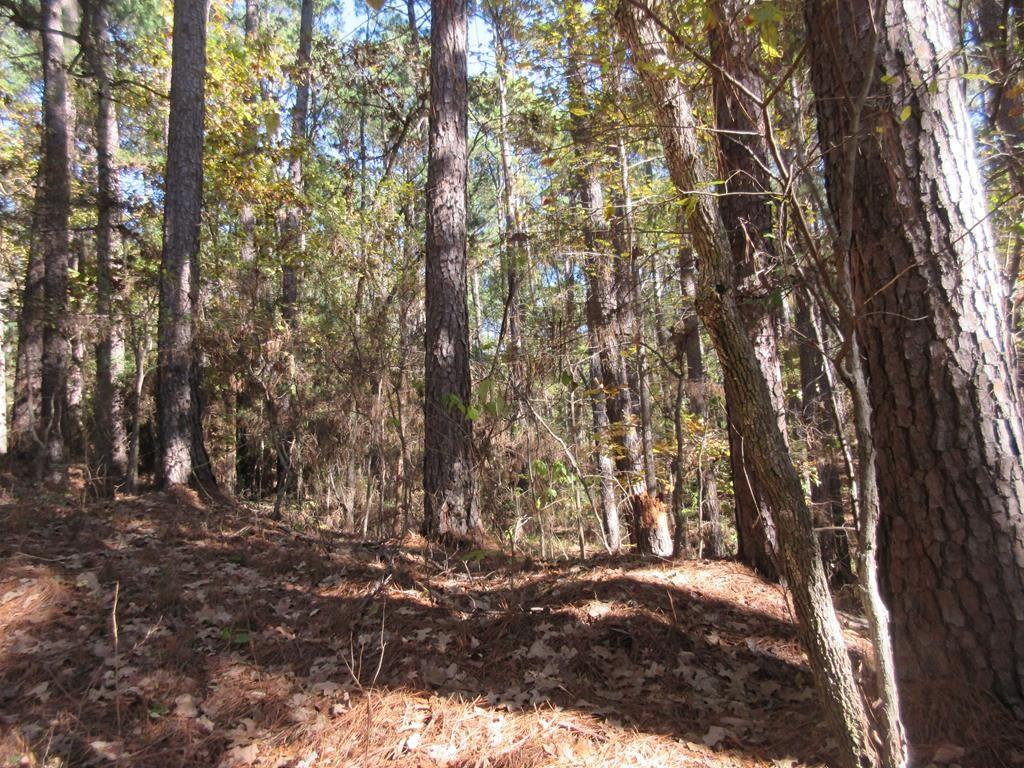 TBD Timberline Trail, Palestine, TX 75801