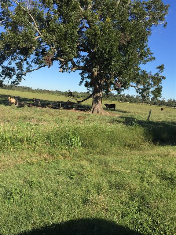 Potential, potential, potential!  Almost 30 acres situated in the Boling ISD.  Ideal for someone looking for a country retreat!  Property is completely fenced with app. 530' of road frontage.