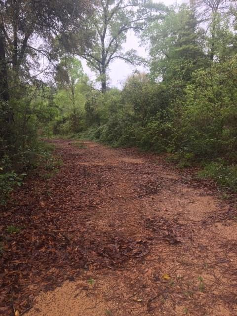Very nice 10.005 acre tract partially cleared with mature hardwoods and beautiful Magnolia Trees. 3081 Hwy frontage. This is Willis ISD school district. Low taxes, NO HOA, unrestricted with two nice homes on each side of property. Bring your farm animals and enjoy this nice acreage. High and Dry.