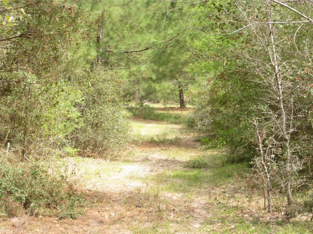 A nice country acreage tract that has many good features.  Property was in a fire about 10 years ago, now has good pines, live oaks, other hardwoods & yaupons.   Has a good pond with stocked fish.  Great views all across the property especially near the pond and the backside of property.  Has a p/l easement on the north fence line about 50 feet from fence traveling west to east. Many sites for building that hunting cabin or home.  Has electric on Reese Lane, no water wells or septic. Seller owns 100% of minerals and they are negotiable depending on price offer.  Has gated entrance off Reese Lane with nice live oaks and some pine. Come see this great property.