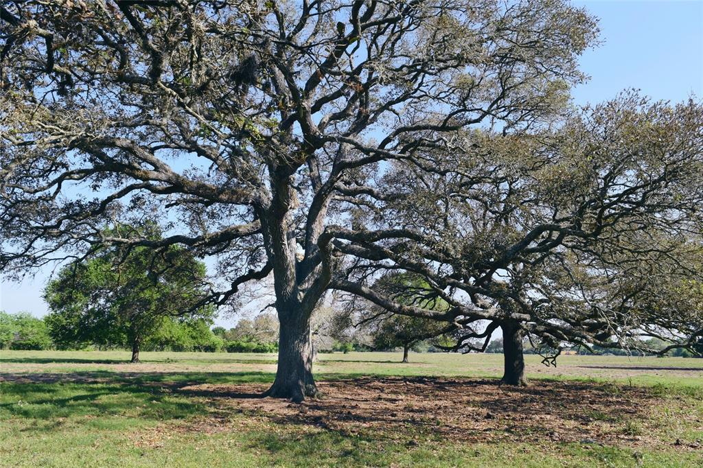 Absolutely gorgeous! This beautiful property consist of around 12 acres of row crop and 27 acres of fenced pasture with a mix of HUGE live oak and elm trees. The land is surrounded by large cattle properties also filled with huge live oaks. Just minutes from Wharton but out in the country where all you hear are birds chirping! There is a large set of cattle working pens and a water well are located at the from of the property.  This property is set up for your cattle, horses, or your dream country home site. This one is definitely worth a look.