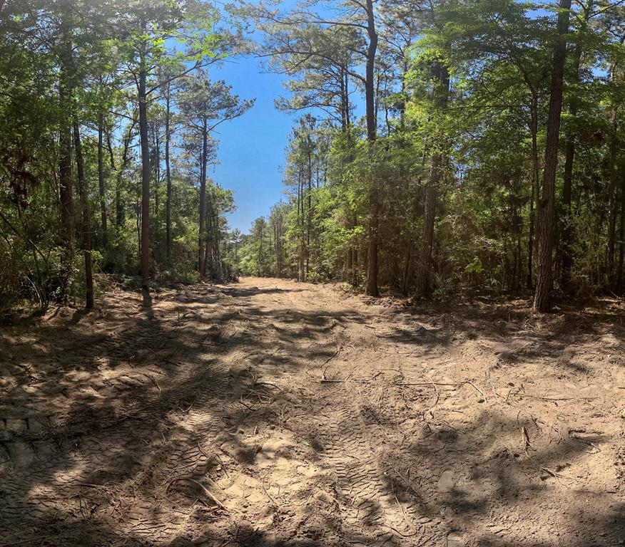Lightly restricted 17.6 acre tract in Anderson-Shiro ISD. Located on a peaceful, dead-end county road, this tract features rolling terrain, towering pines and hardwoods, a seasonal creek, and access to electric and water. Wonderful opportunity for a homesite nestled in the woods for full or part time living! Timber exempt.