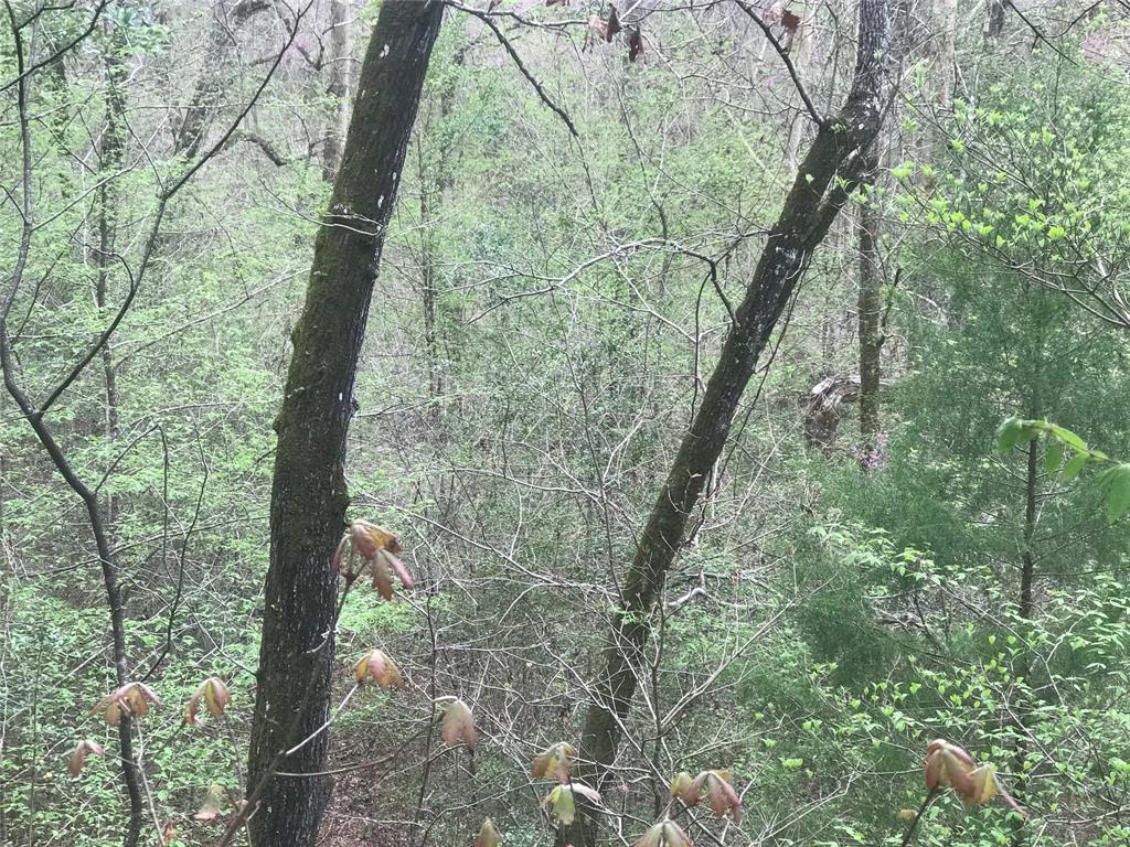 33 +/- acres in great location close to Lake Livingston. Long time family owned timber tract that has direct access to Hwy 190.  Rolling terrain with hard and soft woods in a Timber exemption that could be harvested.  Recreational/Hunting property that is primed for development.  Mineral estate negotiable.