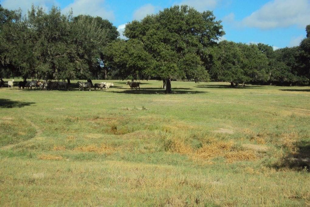 This piece of paradise is located between Hallettsville and Splashway and is ready for your new home or your hunting blind! This area is known for white-tailed bucks and abundant wildlife. It is fenced, cross-fenced, and has plenty of beautiful mature trees and open areas for cattle. A hay barn and cattle pens are ready for your herd! The cute 2 bedoom/1 bath farmhouse with a wood heater and the large porch is perfect for watching the wildlife awaken as the sun provides it's evening beauty. The farmhouse is located close to the gated entrance leaving plenty of space close to the pond to build your dream home! *an additional adjoining track is available if interested in additional acreage.