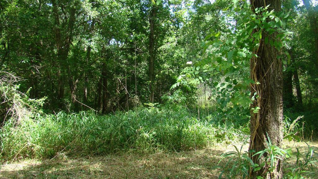 1309 Woodvine, Friendswood, TX 77546