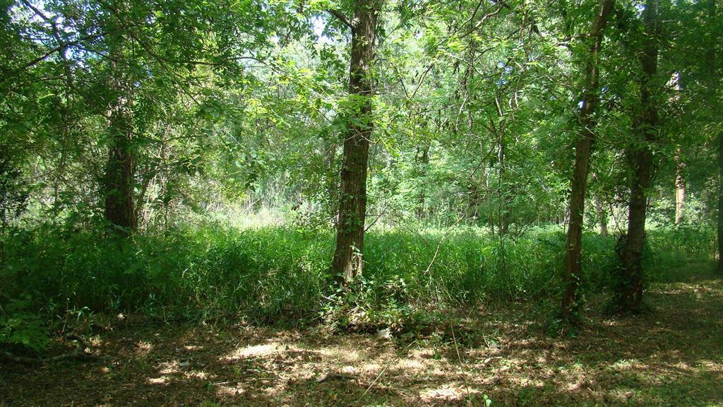 1311 Woodvine, Friendswood, TX 77546