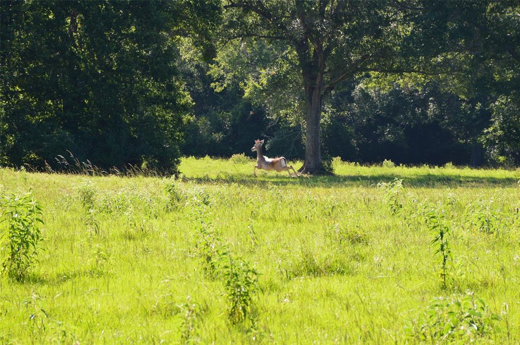 10 acres being cut from a 31 ac parent tract. Unrestricted in Highly sought after Anderson ISD. County Road frontage. Survey required. Close to proposed bullet train route. Property has no gate. Additional acreage available.