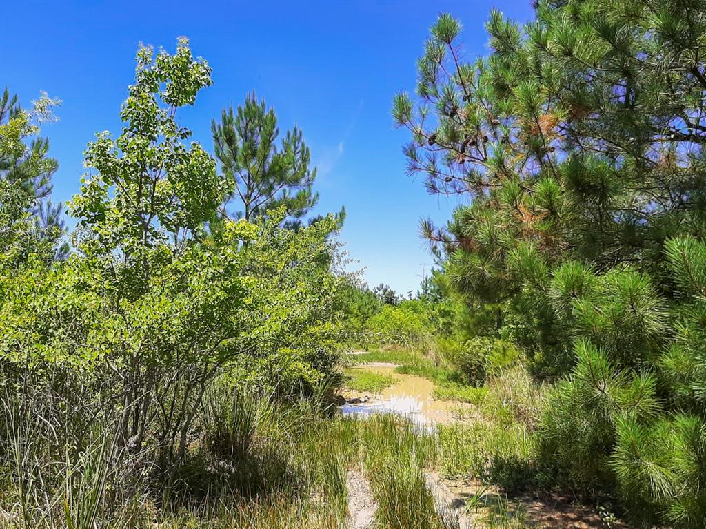 """Pinewood Forest"" – Excellent opportunity for inexpensive land for recreation or hunting use. Mostly natural registration of trees from prior timber harvest. Adjoining property is for sale and would provide legal access."