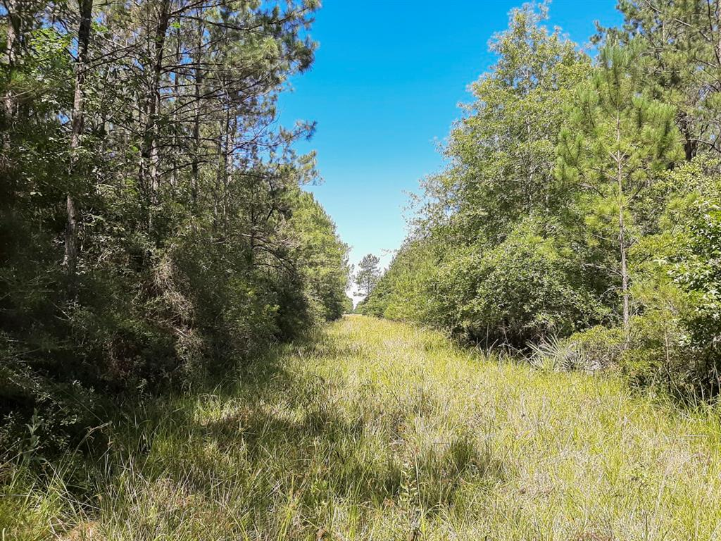 """Pinewood Forest"" – Excellent opportunity to own a heavily wooded tract of land that offers a planted pine forest along with a natural habitat for wildlife and game."