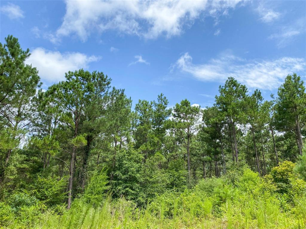 First time open market offering. Historically used as industry forestland. Good access frontage on FM 2912 and/or FM 355 near Groveton, Texas. Varying ages of pine plantation with mixed hardwoods along creek drains. Ready for continued silviculture or conversion to pasture. High and dry for recreation and/or improved farm/ranch. Seller to reserve two 50' easements on either side of the existing pipeline ROW.