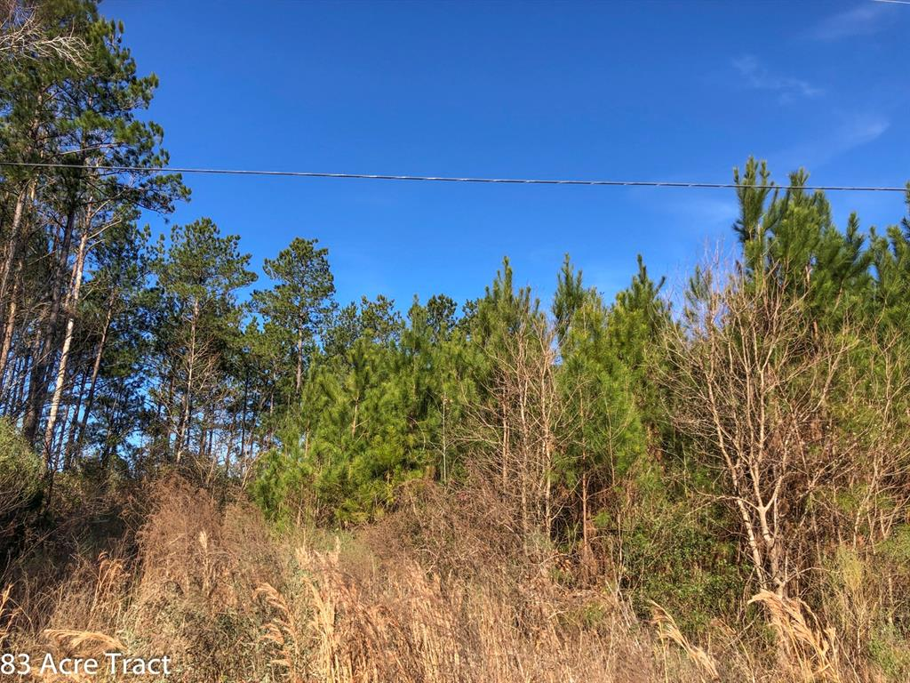 First time open market offering. Historically used as industry forestland. Good access frontage on FM 2912 and/or FM 355 near Groveton, Texas. Varying ages of pine plantation with mixed hardwoods along creek drains. Ready for continued silviculture or conversion to pasture. High and dry for recreation and/or improved farm/ranch.