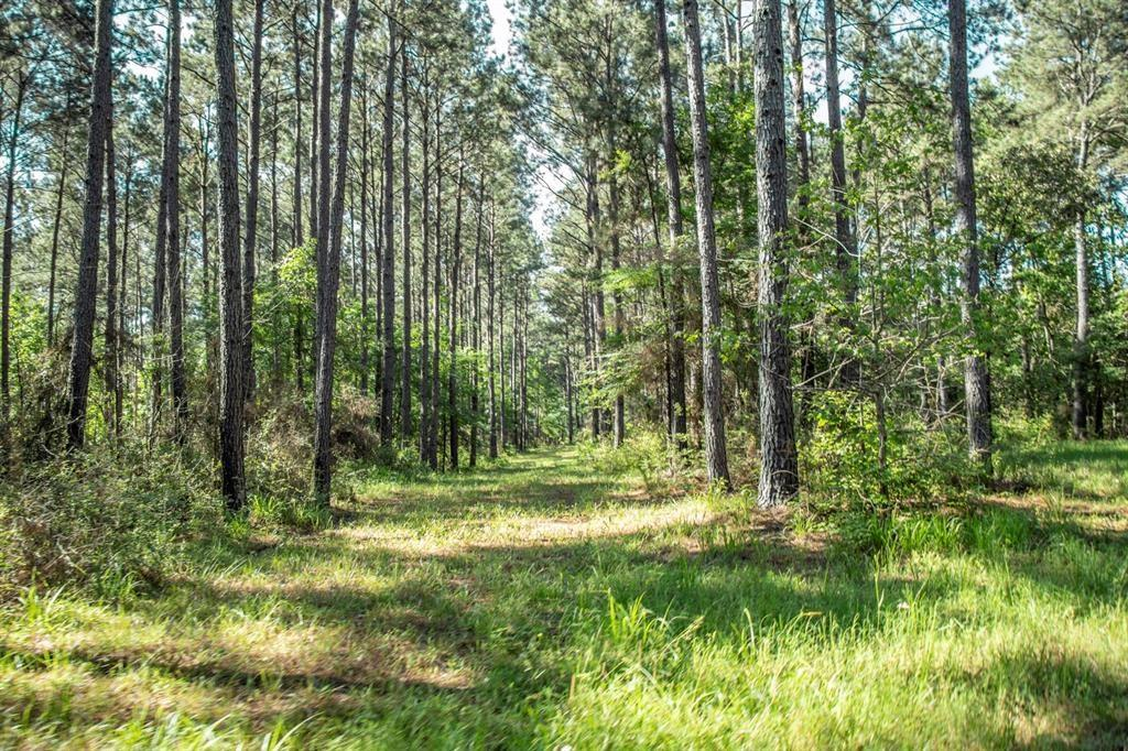 Owner will finance. Great Hunting track of land.  Mostly wooded.  Seller has street range and  shooting range on property.  The property is 100 acres +/-.  Seller will negotiate terms.  Property has a hunting lease that will be cancelled when sold.  Enter property off Hwy 19 onto County Rd. East Lakeview. Property at the end of the road.