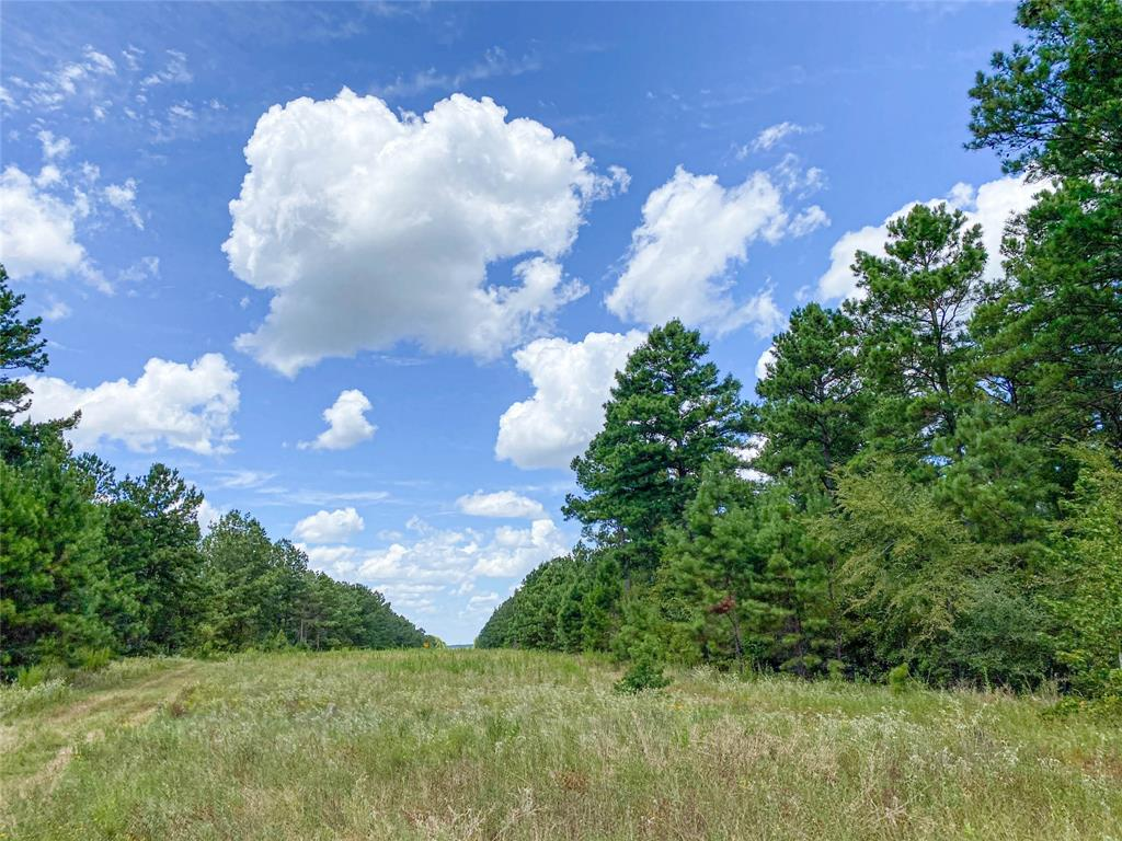 1st time open market offering for east/central Texas forestland, located in the SE Houston County communities of Holly/White Rock. Close to FM 1280 but far enough off on low traffic county maintained rd.. (CR 4250). Managed pine timberland intermixed with hardwoods. Good topography with no floodplain. Lovelady ISD!