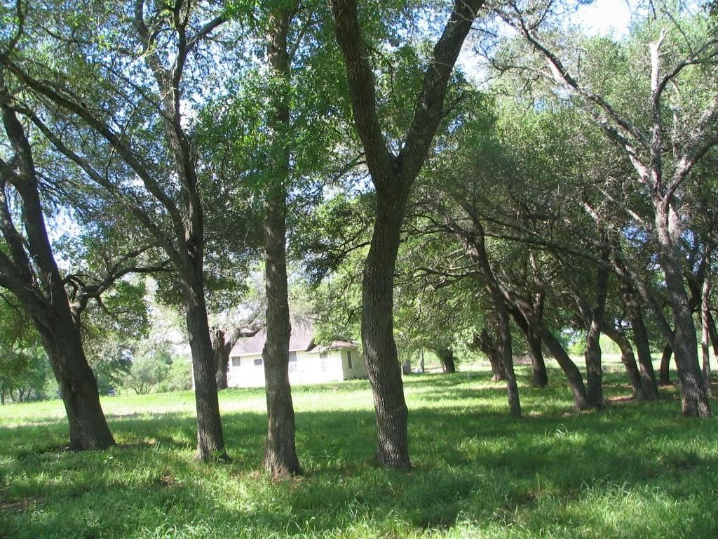 Nice secluded property at the end of a county road. The property is a good mix of cattle pastures and woods with a healthy population of deer, ducks and doves. There is a nice building site that overlooks the property that has large live oaks and offers great views. There is an old house on the property with electricity and water well. If you are looking for a interesting property with lots of potential this one deserves a look!