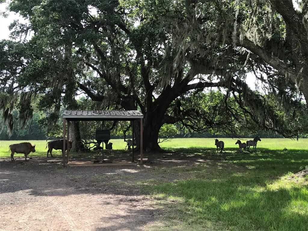 One of the prettiest properties to be found anywhere- especially so close to Houston. Less than 1 hour drive from most places in Houston and substantially less from southwest Houston.  Everything in place to enjoy immediately. 30'x180' implement barn.  Enough equipment to maintain will convey with sale- including tractor, shredder, mower, small tools, etc.  Overbuilt 1,600 sq.ft. barn built out with kitchen, bath, beds to sleep 5, nice living area. Can easily add additional living space.  All HVAC.  Huge Live Oaks all over the property.  Entirely fenced with relatively new 8' game proof fencing. Great for exotics, cattle, hunting, etc. Let this be your get-a-way!  Private location at end of dead road road. Gated. Slough or bayou runs thru middle of property. Has 2 covered feeders with concrete flooring. All large land owners nearby. Halliburton's corporate bass fishing and duck hunting lake is also directly adjacent to subject property.
