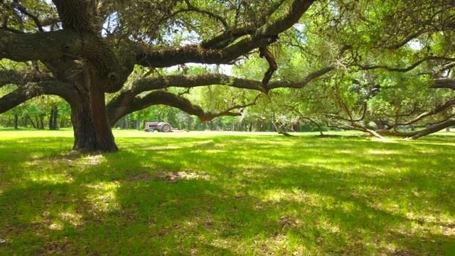 +/- 35 Acres + Homestead to be conveyed in the sale. Enjoy Country Living in New Ulm, TX in the rolling hills of beautiful Austin County, Texas. This lovely ranch style home is surrounded with gorgeous live oaks and hickory trees with two ponds for water. The spacious country home on the property has 3,562 SF which has a large great room with a stone fireplace, custom built-ins and an impressive wet bar with beautiful woodwork throughout. The ranch style home has 4 bedrooms/3 bathrooms with its own Mother In Law Suite with a private entry, bath and a large sun porch.  Great central location with easy access to the major highways: 290, 36, 71 and I-10. Just a short drive to Bellville, Columbus, Sealy, Brenham, College Station and Houston. Great place for your weekend getaway or to build your new homestead! Bring your horses, cows or off-road toys! Relax and enjoy this peaceful getaway from the hustle and bustle of the big city life! Come see it today before it's gone!