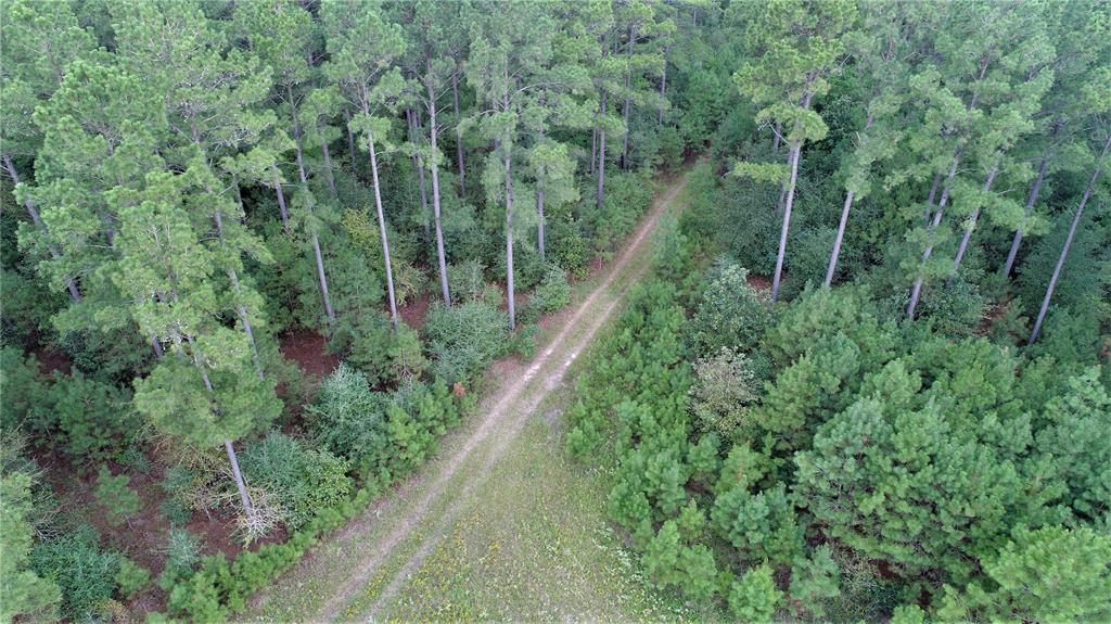 PERFECT HUNTING TRACT!   This 97.54 acres located just off FM 230 on CR 3540 (Searcy Lane) is the perfect spot! The property is wooded with natural pine and some planted pine with a mixture of hardwood. There are some nice trails and a pretty pond. This property would be idea for a weekend get-a-way or even full time living with consolidated water at road and electricity available. This location is a quiet and peaceful area with lots of wildlife, and close enough to town for all the resources you would need. Property wraps around Antioch Church and has an easement off FM 230. For a private showing, call us today!