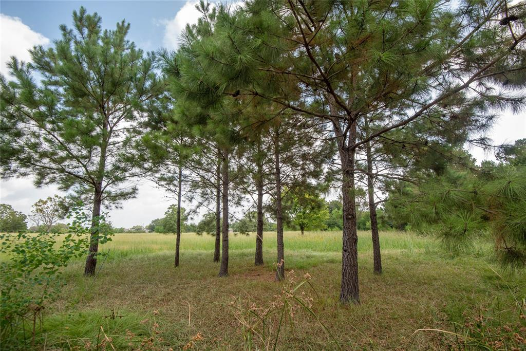 Enjoy 13 acres on a beautiful road next to the Tomball Country Club just off of Huffsmith-Kohrville Road. This paved road has beautiful homes and estates and  this is the last open acreage tract available. Enjoy your own amazing farm minutes from Tomabll, Houston and the newly opened Aggie freeway. The property has a well and electricity. This property is completely fenced and has a 20 foot screen of trees and bushes planted years ago by the owner to create an incredibly private sanctuary minutes from town. The property has some light restrictions- no RV parks or mobile homes. There is a small cinderblock barn with skylights in the roof. The barn has electricity and a well and a ceiling clearance of 18 feet. With 2 large roll up doors it is designed to pull a tractor through.  There is also a commercial well that irrigates the entire property. The sandy loam soil is perfect for hay, horses or cattle grazing and drains well. No flood plain or low lying areas.