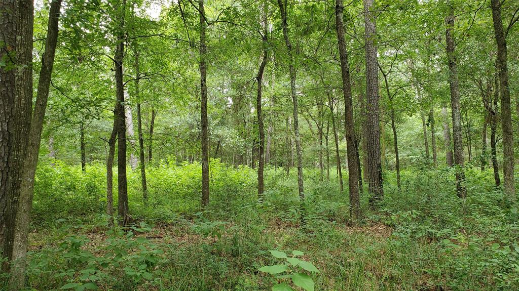 10 acres of pure Paradise! No flood plain. Private & Secluded but just 10 minutes from Montgomery, TX, and just off scenic FM 1097 west. Property is almost 100 % timber with a gentle roll for easy drainage. The property would lend itself to a pond on the southern border so you could build your dream home overlooking the lower valley and pond. Good asphalt roads to the property and the property.