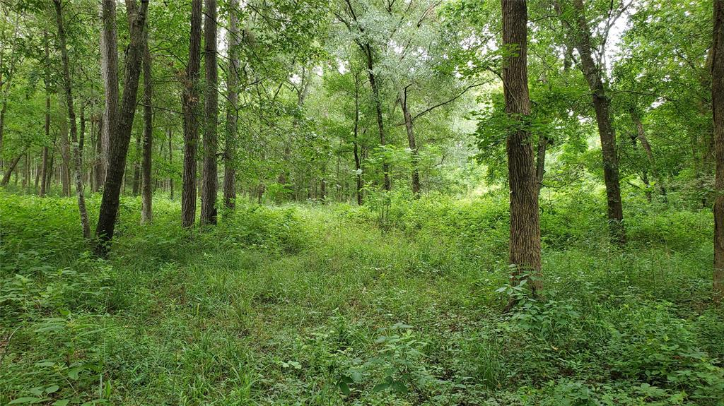 11 acres of pure Paradise! No flood plain. Private & Secluded but just 10 minutes from Montgomery, TX, and just off scenic FM 1097 west. Property is almost 100 % timber with a gentle roll for easy drainage. The property would lend itself to a pond on the southern border so you could build your dream home overlooking the lower valley and pond. Good asphalt roads to the property and the property.