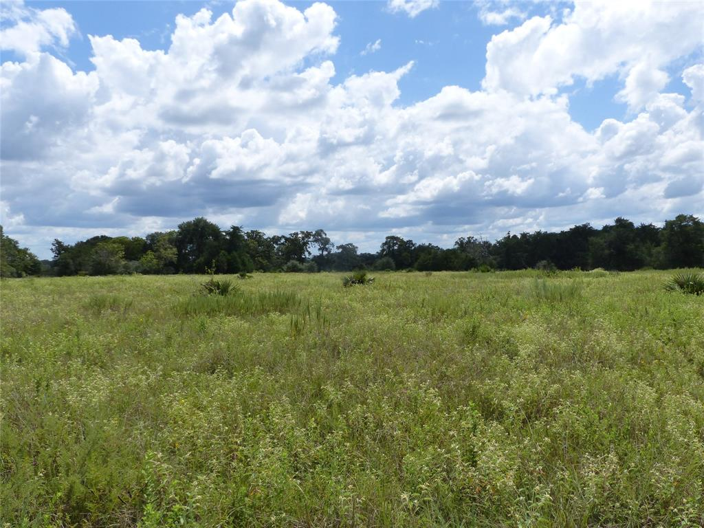 Build your dream home on this beautiful 40.8975 acre tract near Bellville!  The property features big oak trees and abundant wildlife.  There is a 3 bedroom home, but it needs much work to make it habitable.  There is a septic tank and a well, as well as a couple of old barns.  The adjoining 39.9 acres is available as well, MLS# 10626580.