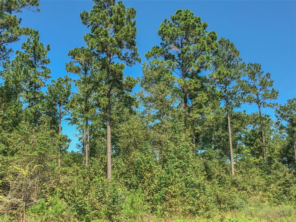 000000 Felix Currie Rd, Point Blank, Texas 77364, ,Country Homes/acreage,For Sale,Felix Currie Rd,93489749