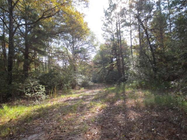 This is a great opportunity to own a nice wooded tract of land with great hunting opportunities.  The property is divided by CR 3610 with approx. 15 acres on the east side and 45 acres on the west side of the road. It is mostly all timber with mature pine and hardwoods. The area has a history of great deer hunting. The surrounding properties consist of large timber tracts and ranching operations. It is located approximately 7 miles from Lovelady and Trinity and offers several good sites for that new home.
