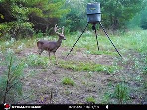 0000 County Rd 236, Oakwood, TX, 75855