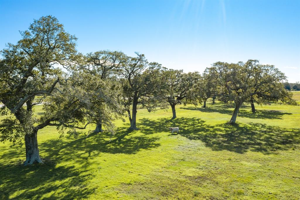 Beautiful 13.195 acres on FM 2004 just minutes from Lake Jackson!  No Flooding! What an amazing place to build your dream home.  Features gorgeous oak trees, pond with solar well, good perimeter fencing for all your animals.  Ready for your new home!