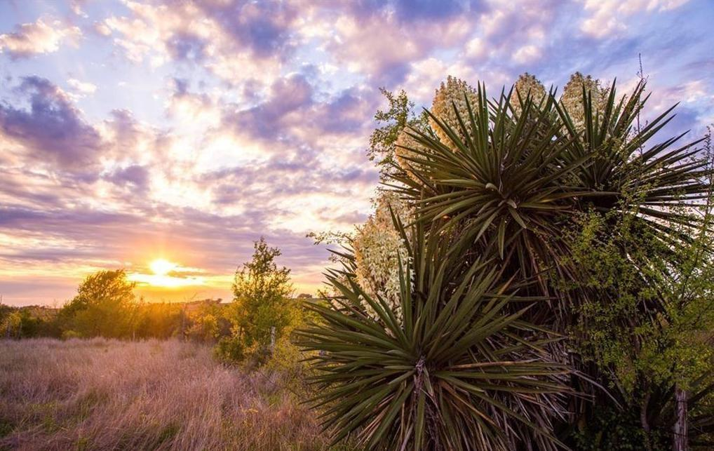 A once in a lifetime opportunity to own a soaring peak of historic Geronimo, TX. One of the highest elevations in the area, this hilltop is the perfect home site for anyone seeking privacy, seclusion & spectacular panoramic views. Unobstructed countryside views all the way from Seguin to San Marcos, will surely take your breath away. This tract is fully Ag exempt, tucked away inside the Bluestem Reserve gated Farm & Ranch Community. Interior lot with water views. Mature oaks, elm & abundance of wildlife.