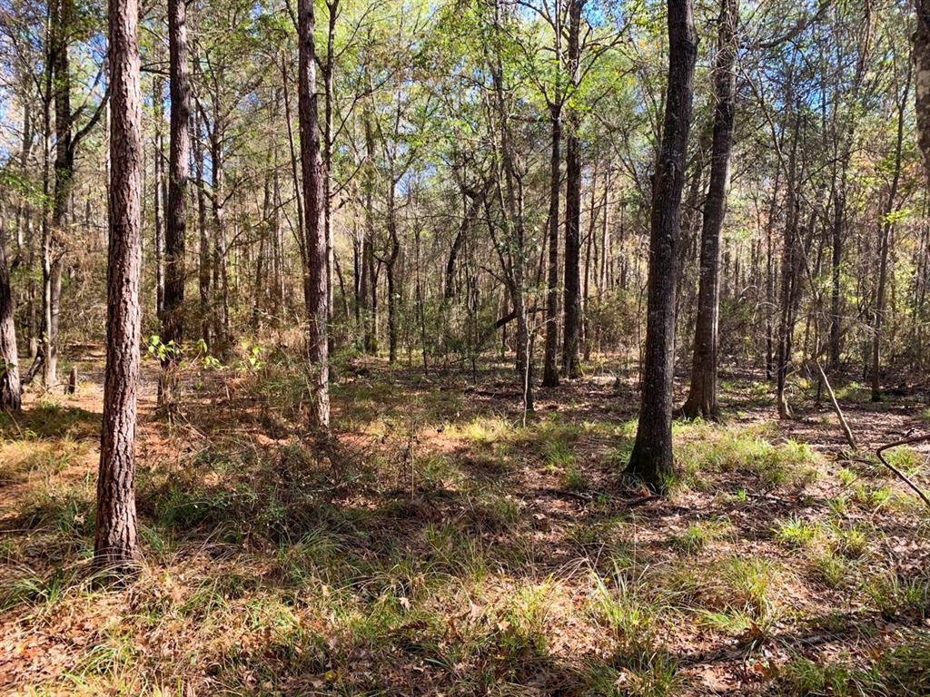 Heavily wooded property off CR 2050 in the Hardin school district in east Liberty County. No floodplain. Outside city limits. Accessed by a deeded easement. Located in a quiet area, with a low population. Great shape. Lots of possibilities.
