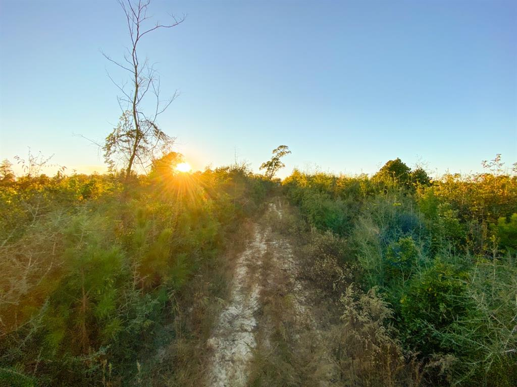 168 +/- acres of beautiful and secluded Livingston acreage! Hunting, recreation, timber, rolling topography, and ATV trails await you.  Pine plantation mixed in with hardwoods along creek drains. The tract is currently set up for hunting and can hold several hunters. Public ROW for access. Go Solar!