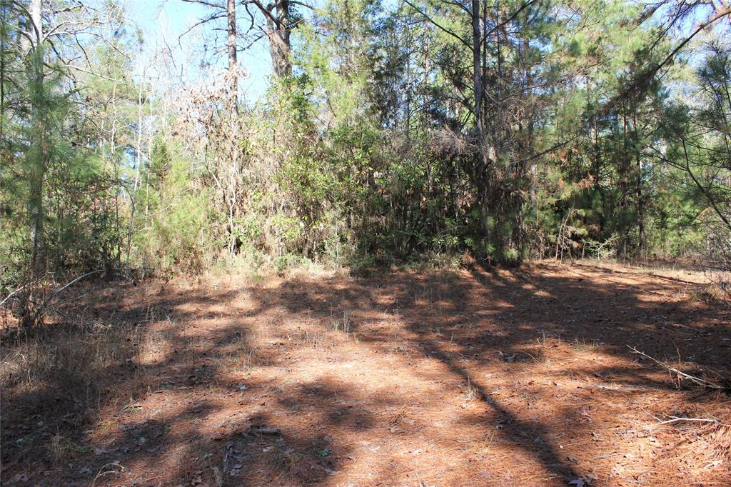 A rare find! 4+ acres with lots of potential in the Livingston School District. This land is perfect to build your own home or move in a mobile home on the hill of the property. There is power available through Sam Houston Electric Cooperative. It has an assortment of pine and hardwood timber.  This tract won't last long. Call to schedule your private tour!