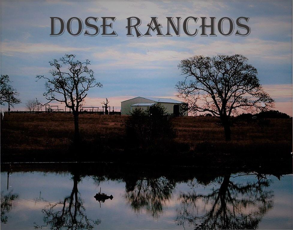 """""""Dose Ranchos"""" located just north of Bedias, TX is a 315.68 acre ranch with plenty of open prairie for an outdoorsman's or livestock producers paradise. 150 acres of this cattle ranch previously participated in the NRCS program and was cross fenced, planted with native Bermuda grass, and ponds were strategically place to rotate and maximize foliage as well as cattle production. The other 165 acres was recently cleaned up and lightly disked. There are two barns with working pens, and catch pens. The ranch is equip with 7 ponds with one measuring approximately 2.3 acres. This property has several wood lines and small seasonal creeks, with plenty of opportunity for hunting and fishing. Lots of build sites with great views. Electrical with transformer already pulled in for a build spot overlooking the larger lake. With approximately 4027 ft of County Maintained road frontage, this ranch presents plenty of opportunities. Must See!! Call listing agent with any questions."""