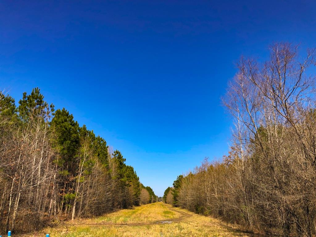 1st-time open market offering. Forestland property in varying ages of pine plantation. FM 787 frontage. Some tracts bisected by Cherry Creek! Electricity along FM 787. Good investment and recreation within an hour of North Houston, TX. Easy access, good frontage.