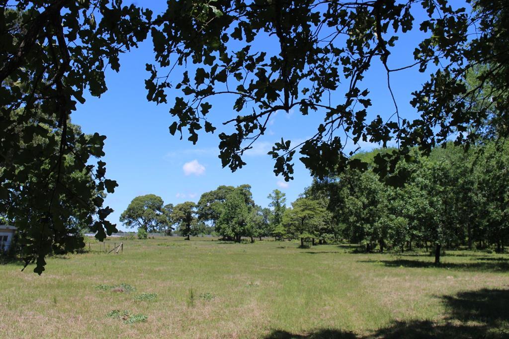 19202 Keenan Cutoff Road, Montgomery, Texas 77316, ,Country Homes/acreage,For Sale,Keenan Cutoff,4805619